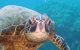 Schnorcheln mit Schilkröten